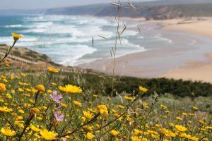 Surfen Algarve 1